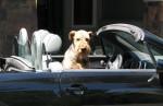 Audi-TT-8N-cute-dog